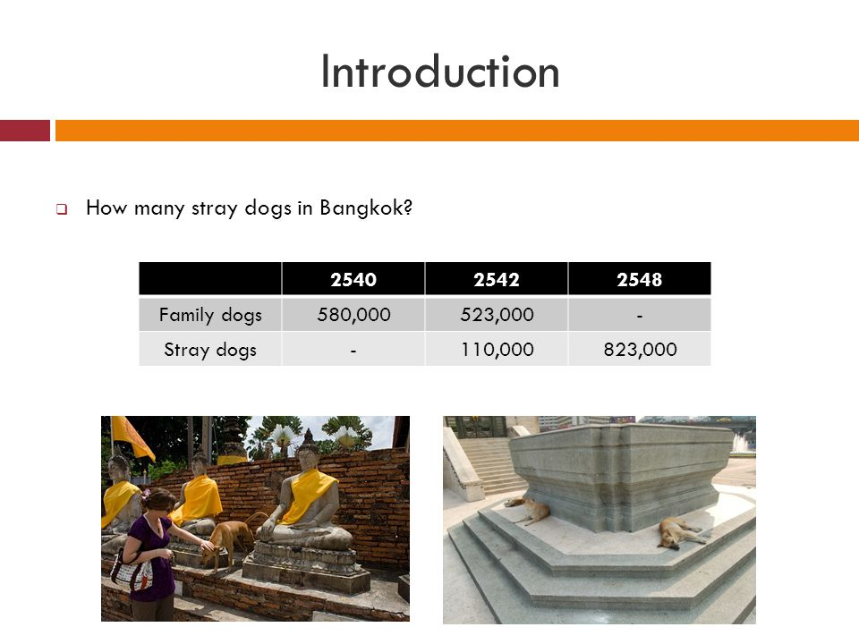 Introduction How many stray dogs in Bangkok 2540 2542 2548