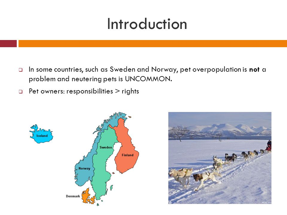 Introduction In some countries, such as Sweden and Norway, pet overpopulation is not a problem and neutering pets is UNCOMMON.