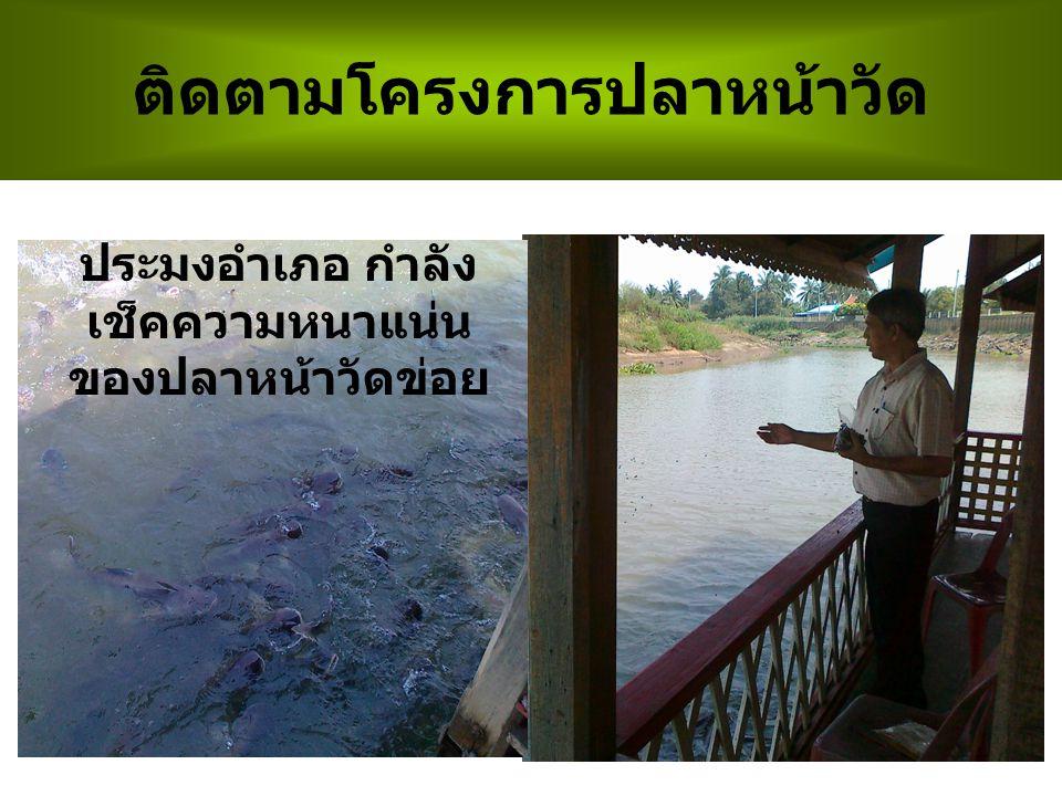 ติดตามโครงการปลาหน้าวัด