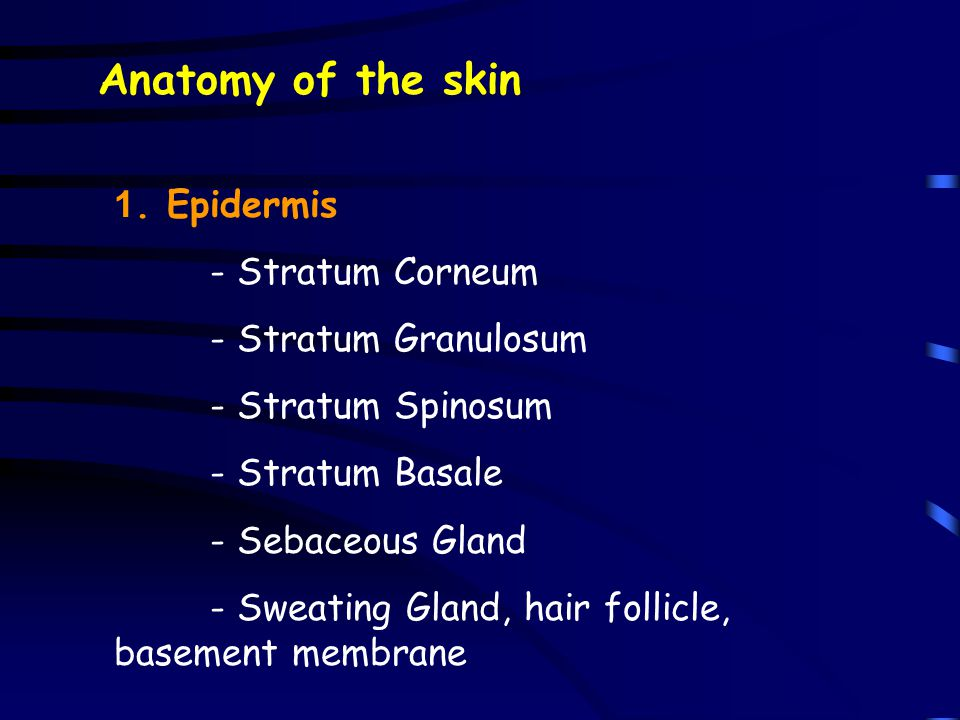 Anatomy of the skin 1. Epidermis - Stratum Corneum