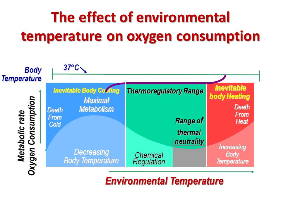 The effect of environmental temperature on oxygen consumption