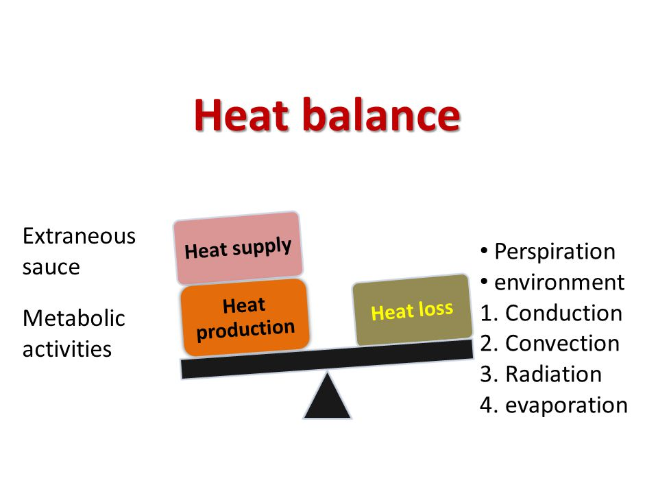Heat balance Extraneous sauce Perspiration environment 1. Conduction