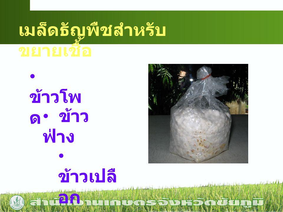 เมล็ดธัญพืชสำหรับขยายเชื้อ
