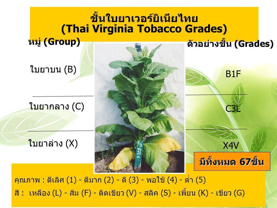 ชั้นใบยาเวอร์ยิเนียไทย (Thai Virginia Tobacco Grades)