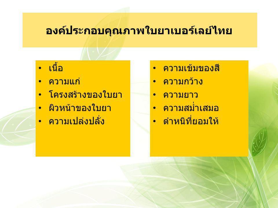องค์ประกอบคุณภาพใบยาเบอร์เลย์ไทย