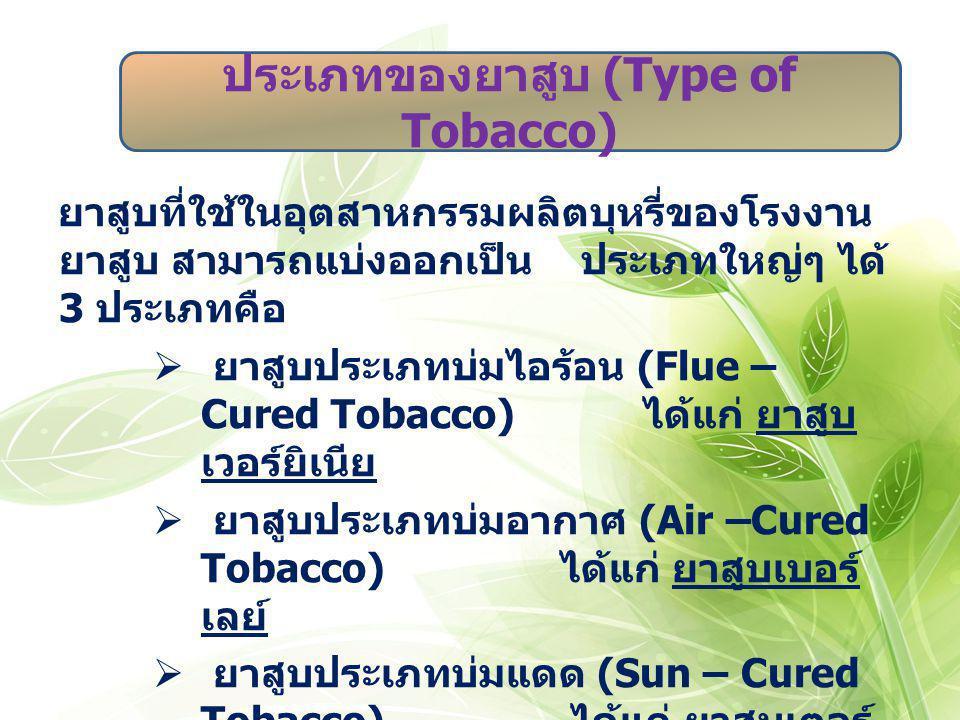 ประเภทของยาสูบ (Type of Tobacco)