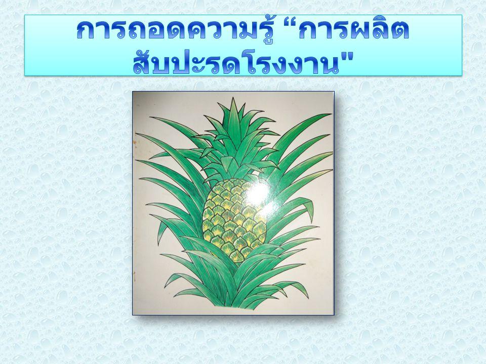 การถอดความรู้ การผลิตสับปะรดโรงงาน