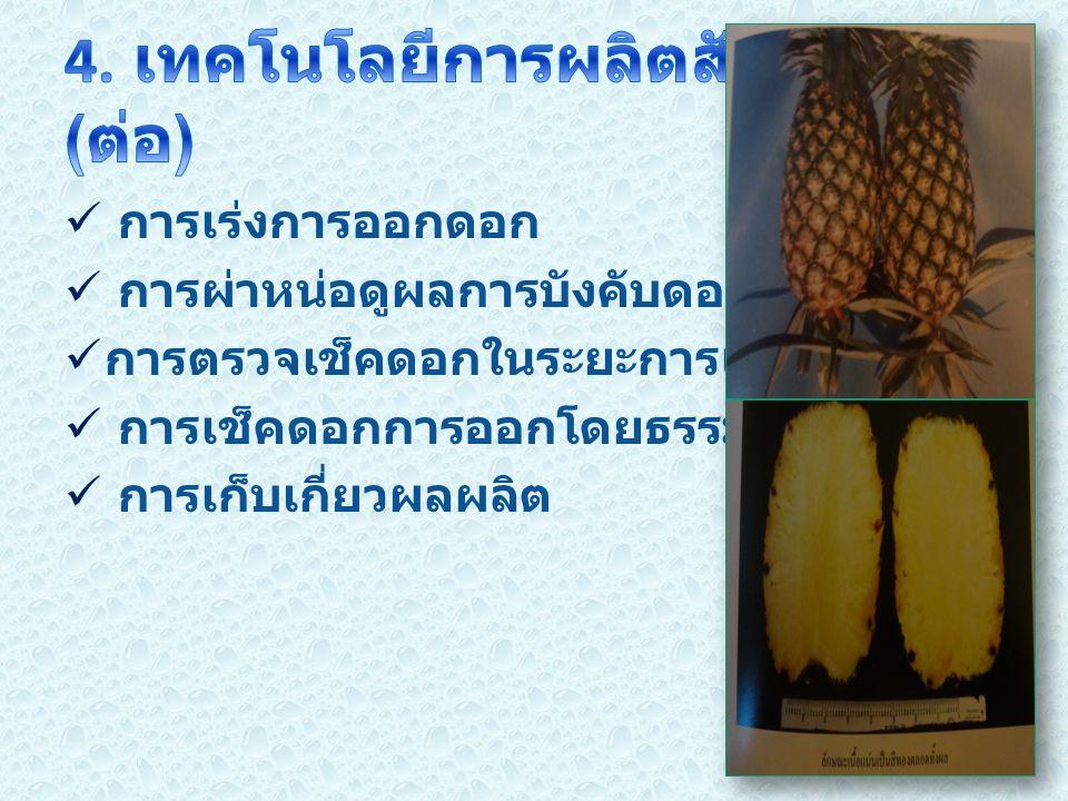 4. เทคโนโลยีการผลิตสับปะรด (ต่อ)