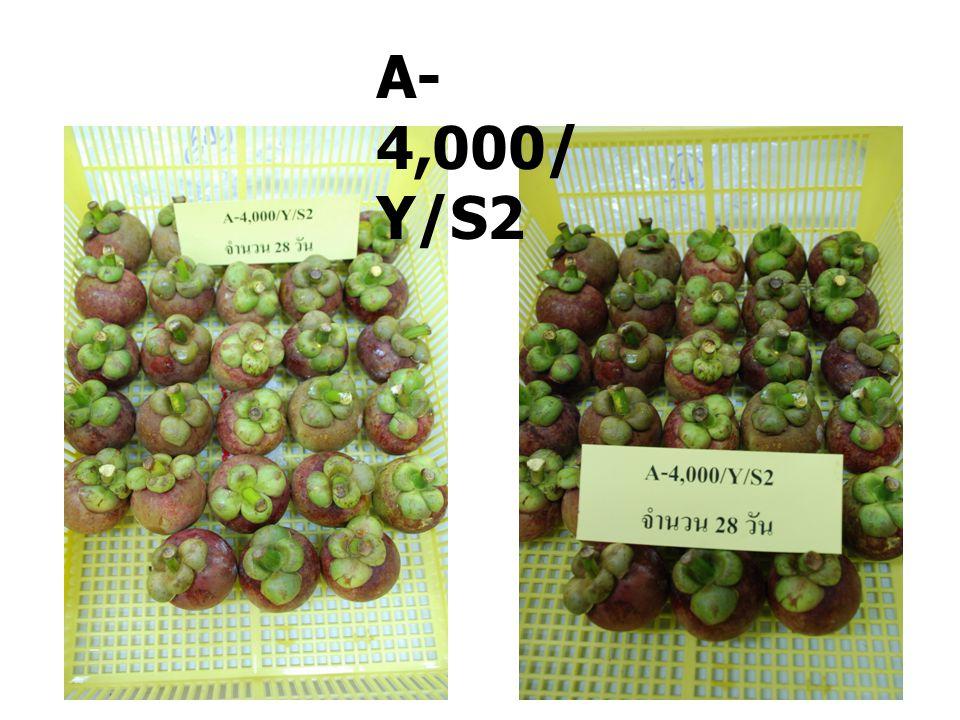 A-4,000/Y/S2