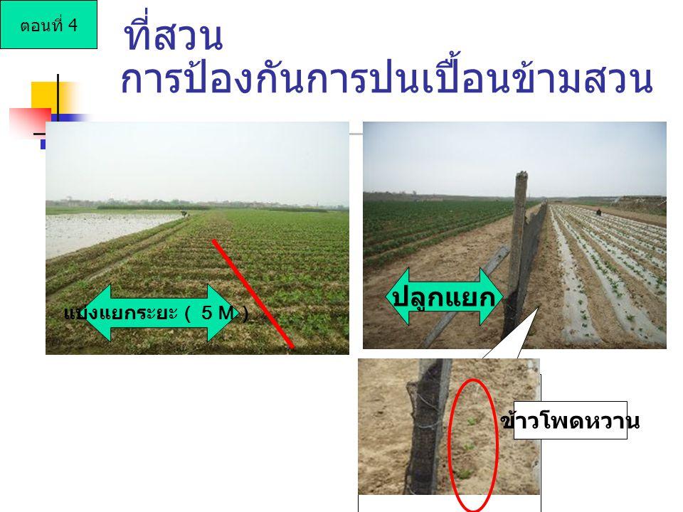 การป้องกันการปนเปื้อนข้ามสวน