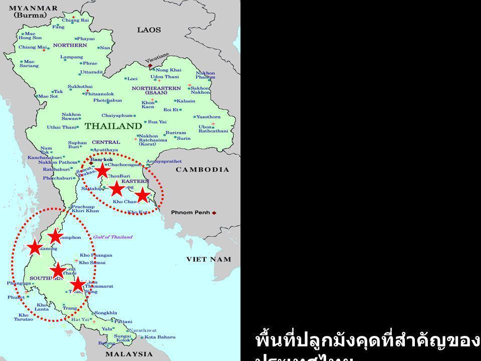 พื้นที่ปลูกมังคุดที่สำคัญของประเทศไทย