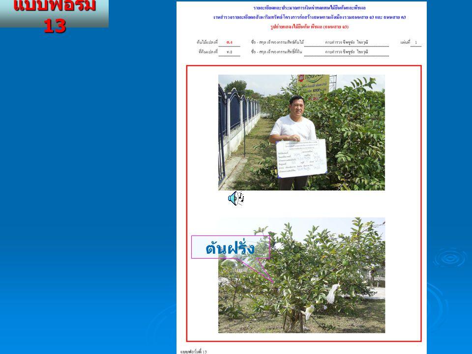 แบบฟอร์ม 13 ต้นฝรั่ง