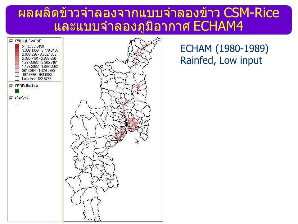 ผลผลิตข้าวจำลองจากแบบจำลองข้าว CSM-Rice และแบบจำลองภูมิอากาศ ECHAM4