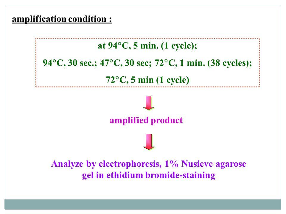 94C, 30 sec.; 47C, 30 sec; 72C, 1 min. (38 cycles);