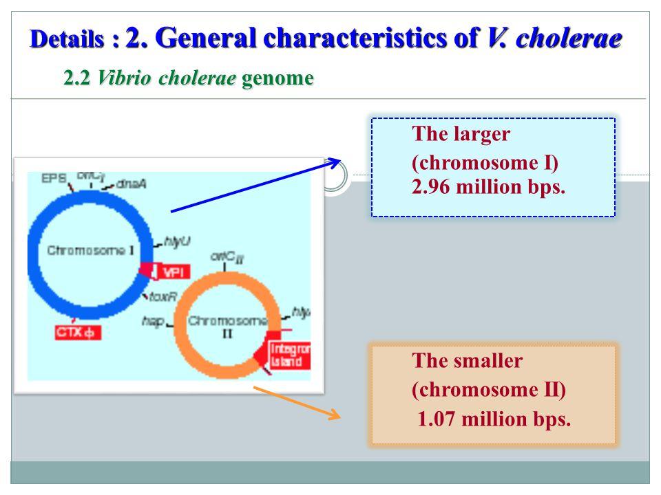 2.2 Vibrio cholerae genome