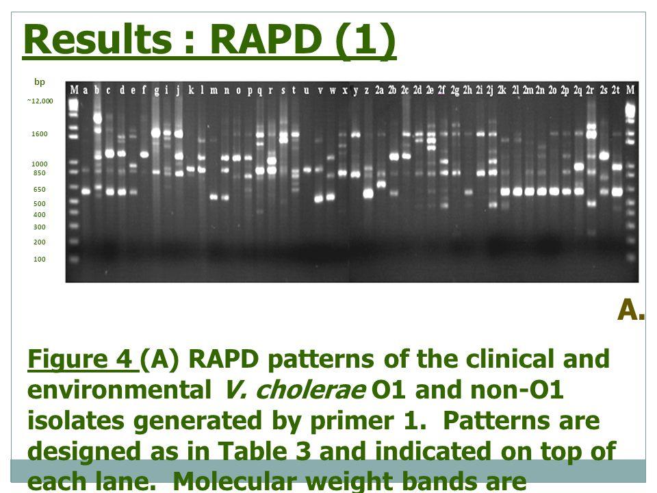 Results : RAPD (1) bp. ~12,000. 1600. 1000. 850. 650. 500. 400. 300. 200. 100. A.