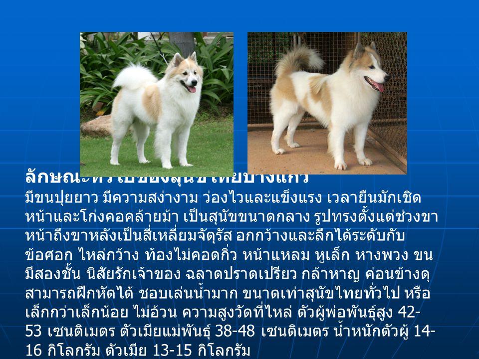 ลักษณะทั่วไปของสุนัขไทยบางแก้ว