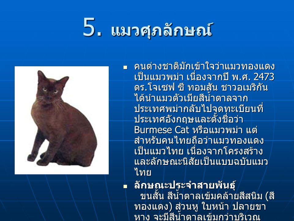 5. แมวศุภลักษณ์