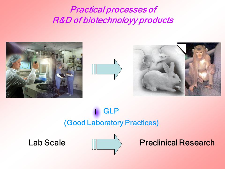 Practical processes of R&D of biotechnoloyy products