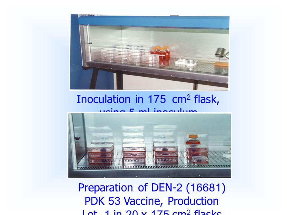 Inoculation in 175 cm2 flask, using 5 ml inoculum