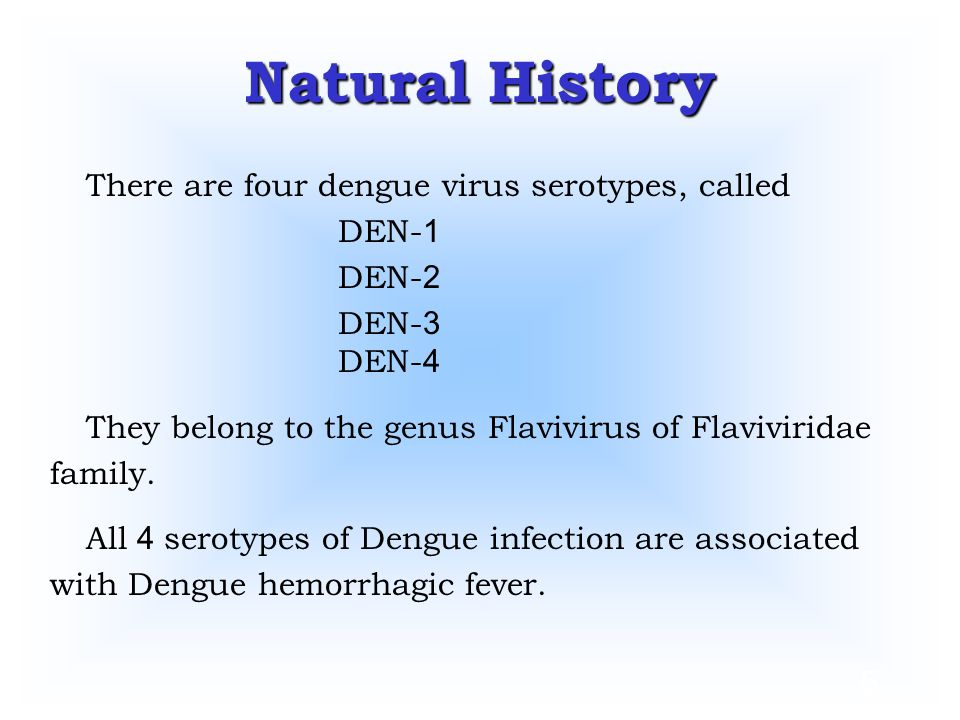 Natural History There are four dengue virus serotypes, called DEN-1
