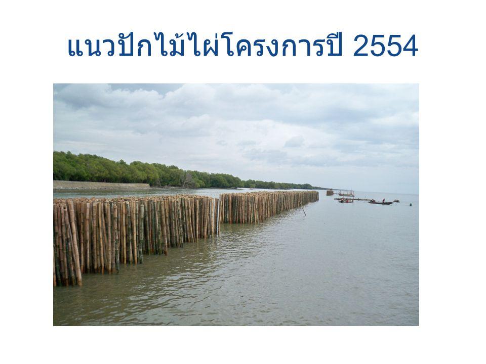 แนวปักไม้ไผ่โครงการปี 2554