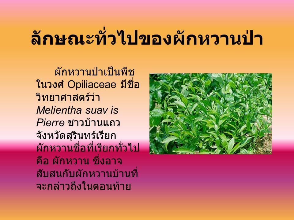 ลักษณะทั่วไปของผักหวานป่า