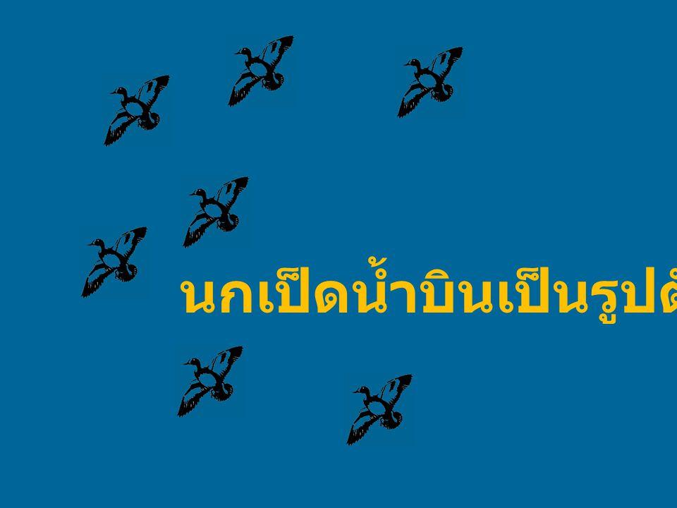 นกเป็ดน้ำบินเป็นรูปตัว V