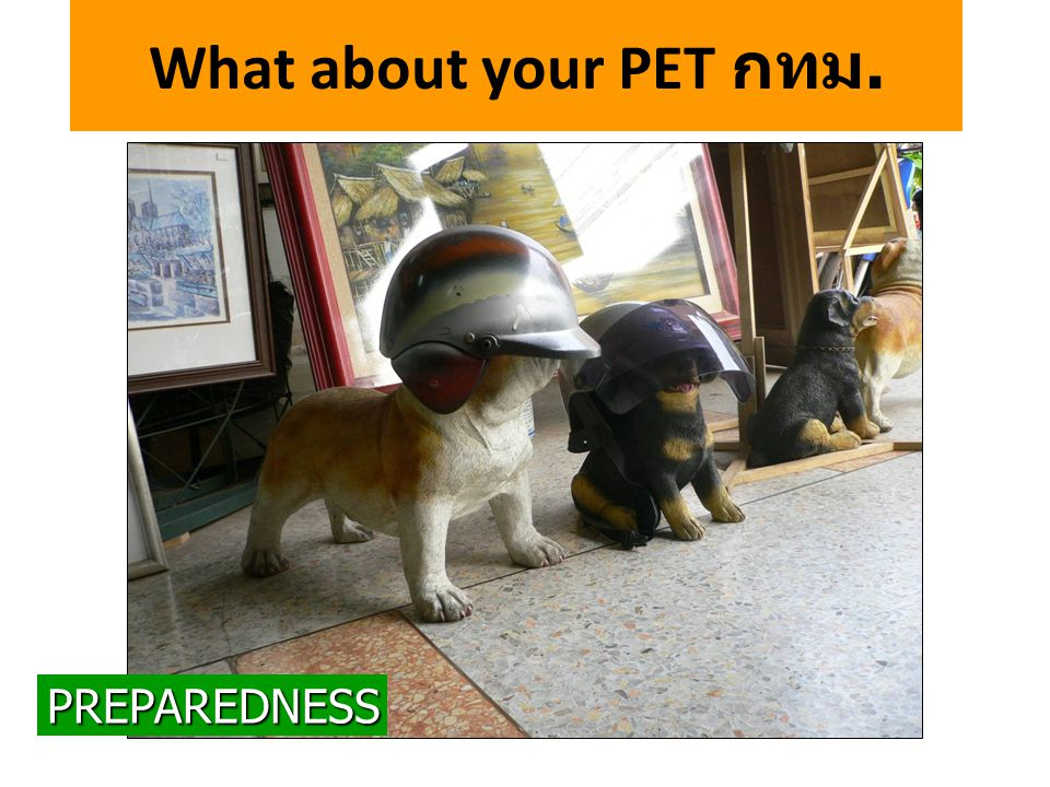 What about your PET กทม. PREPAREDNESS