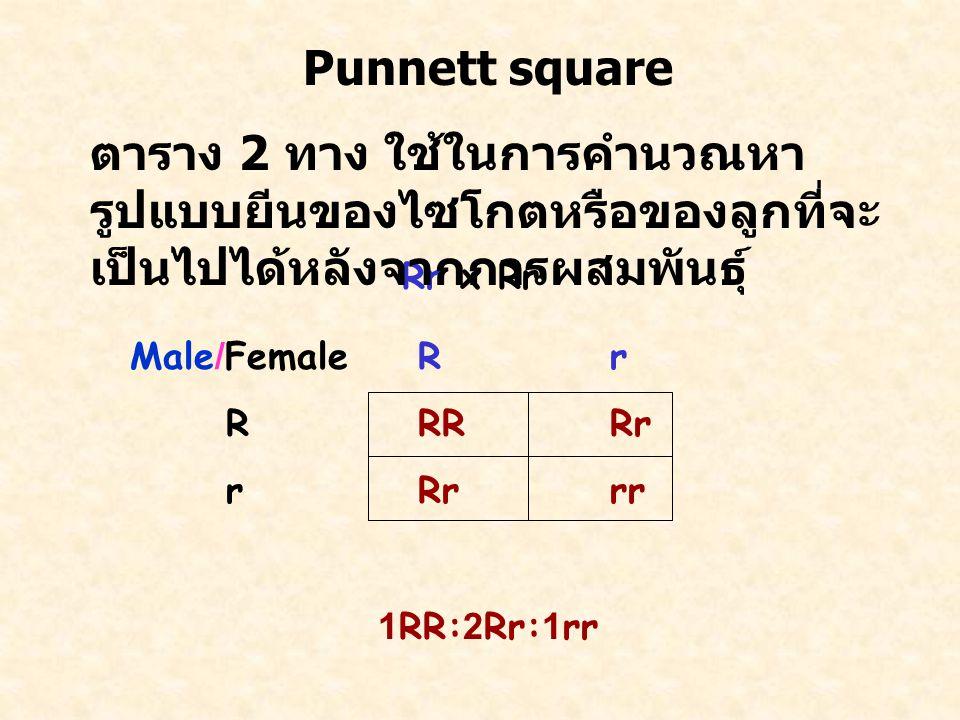 Punnett square ตาราง 2 ทาง ใช้ในการคำนวณหารูปแบบยีนของไซโกตหรือของลูกที่จะเป็นไปได้หลังจากการผสมพันธุ์
