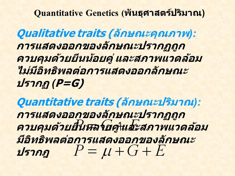 Quantitative Genetics (พันธุศาสตร์ปริมาณ)