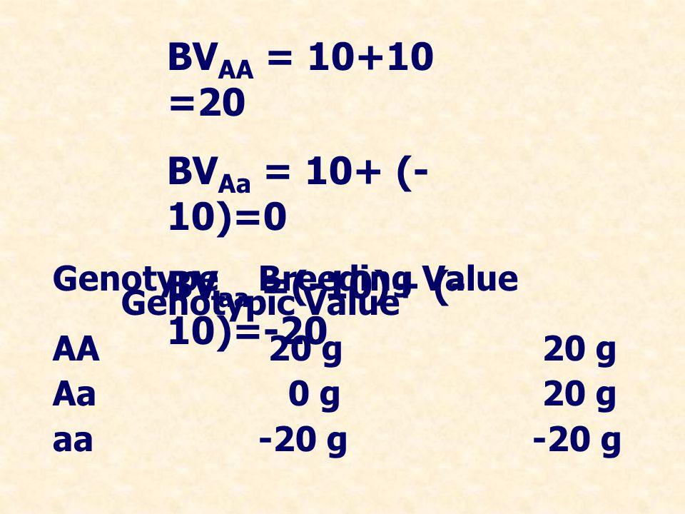 BVAA = 10+10 =20 BVAa = 10+ (-10)=0 BVaa =(-10)+ (-10)=-20