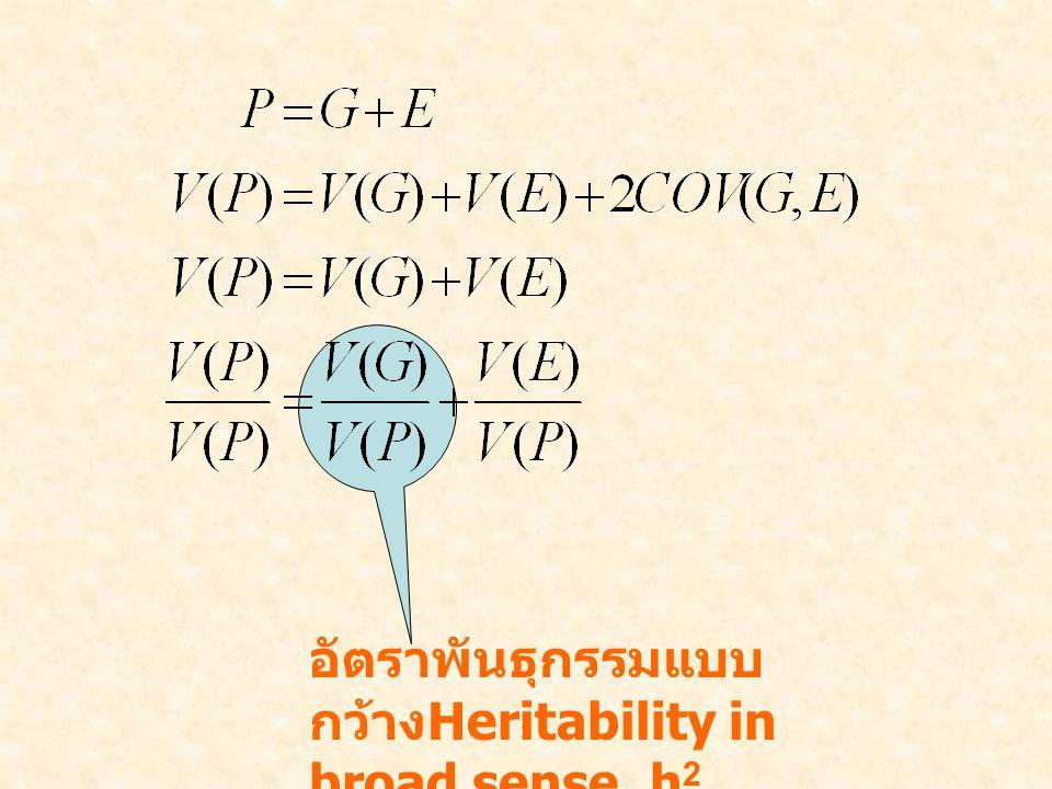 อัตราพันธุกรรมแบบกว้างHeritability in broad sense, h2