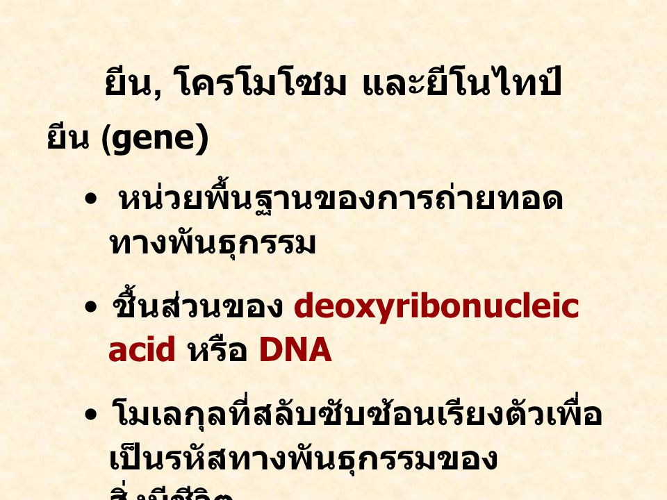 ยีน, โครโมโซม และยีโนไทป์