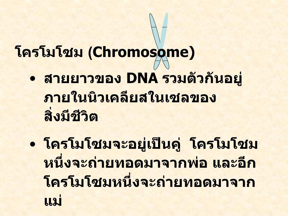 โครโมโซม (Chromosome)