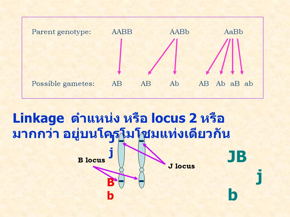 Parent genotype: AABB AABb AaBb