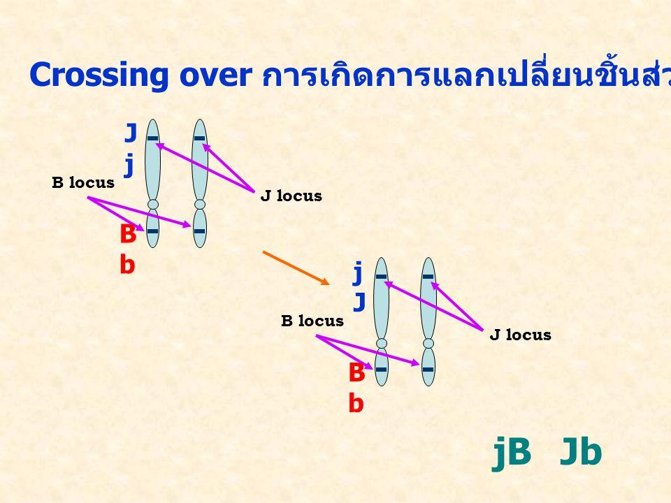 Crossing over การเกิดการแลกเปลี่ยนชิ้นส่วนของโครโมโซมที่เป็นคู่กัน