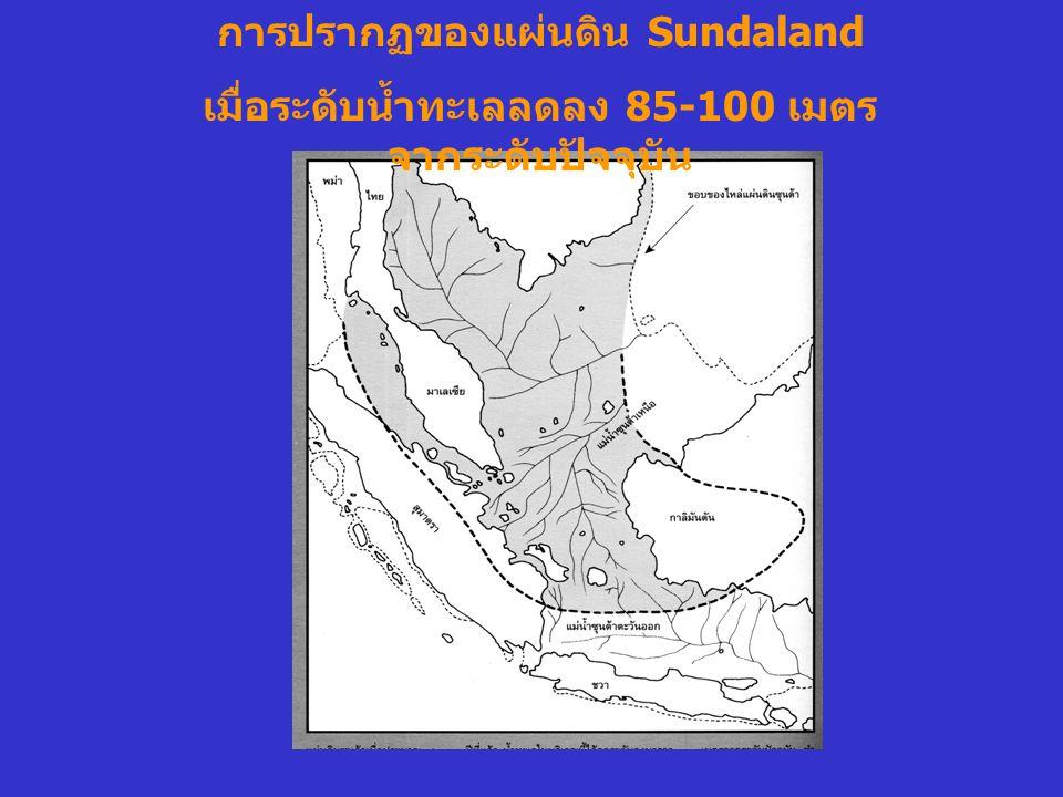 การปรากฏของแผ่นดิน Sundaland