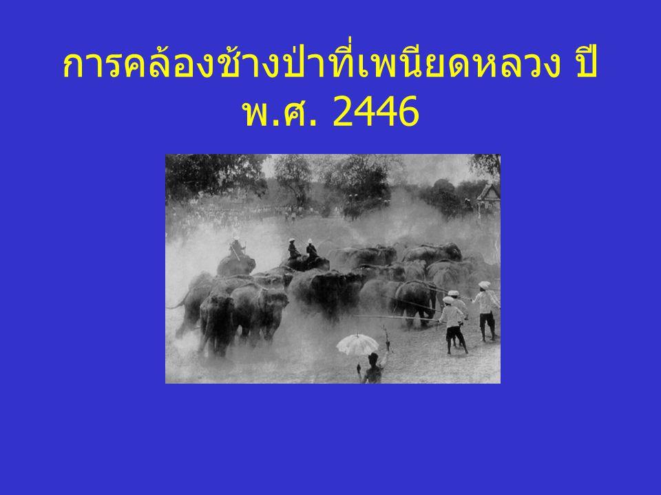การคล้องช้างป่าที่เพนียดหลวง ปี พ.ศ. 2446