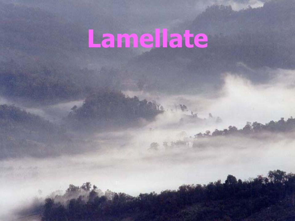 Lamellate