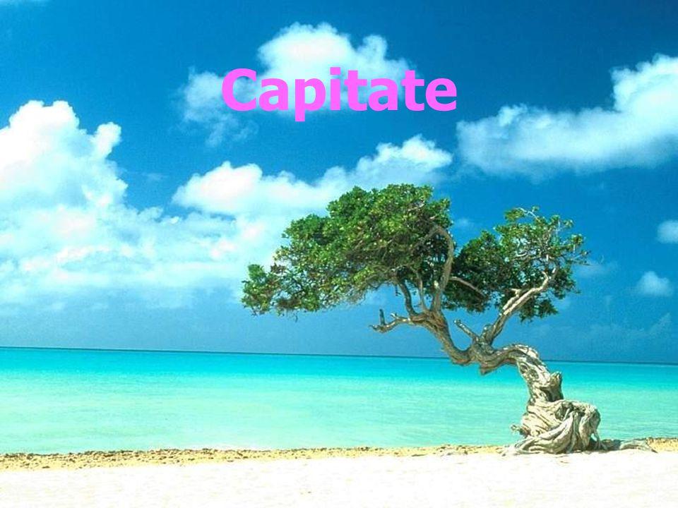 Capitate