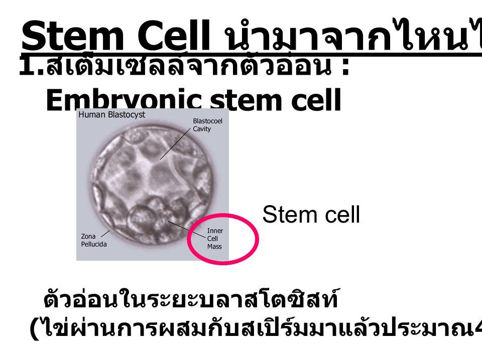 Stem Cell นำมาจากไหนได้บ้าง