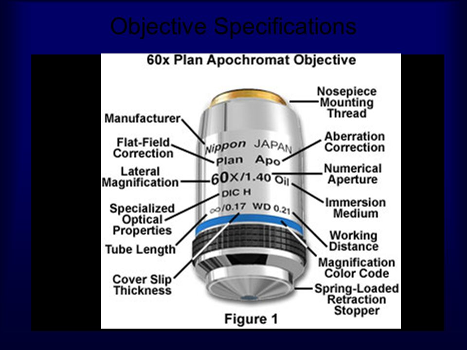 Objective Specifications