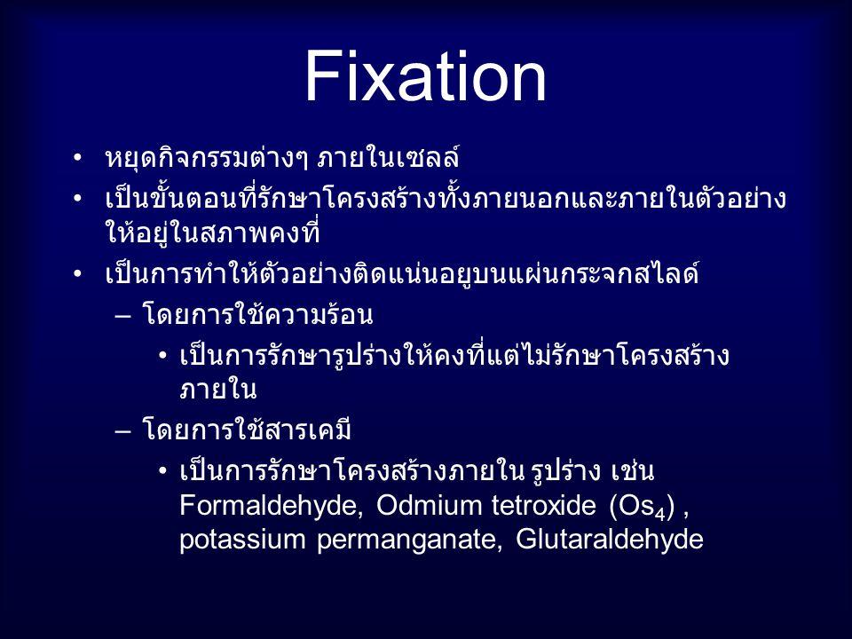 Fixation หยุดกิจกรรมต่างๆ ภายในเซลล์