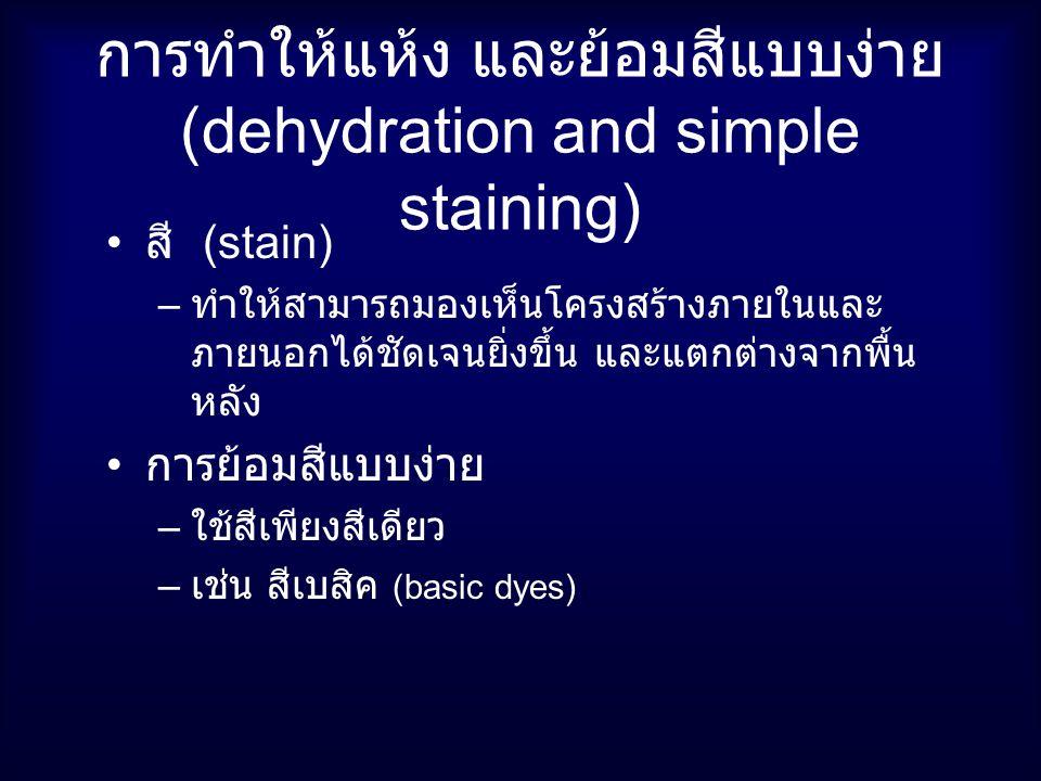 การทำให้แห้ง และย้อมสีแบบง่าย (dehydration and simple staining)