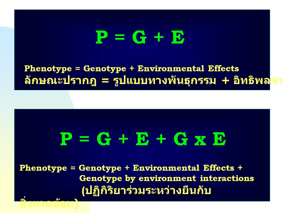 P = G + E Phenotype = Genotype + Environmental Effects. ลักษณะปรากฎ = รูปแบบทางพันธุกรรม + อิทธิพลจากสิ่งแวดล้อม.