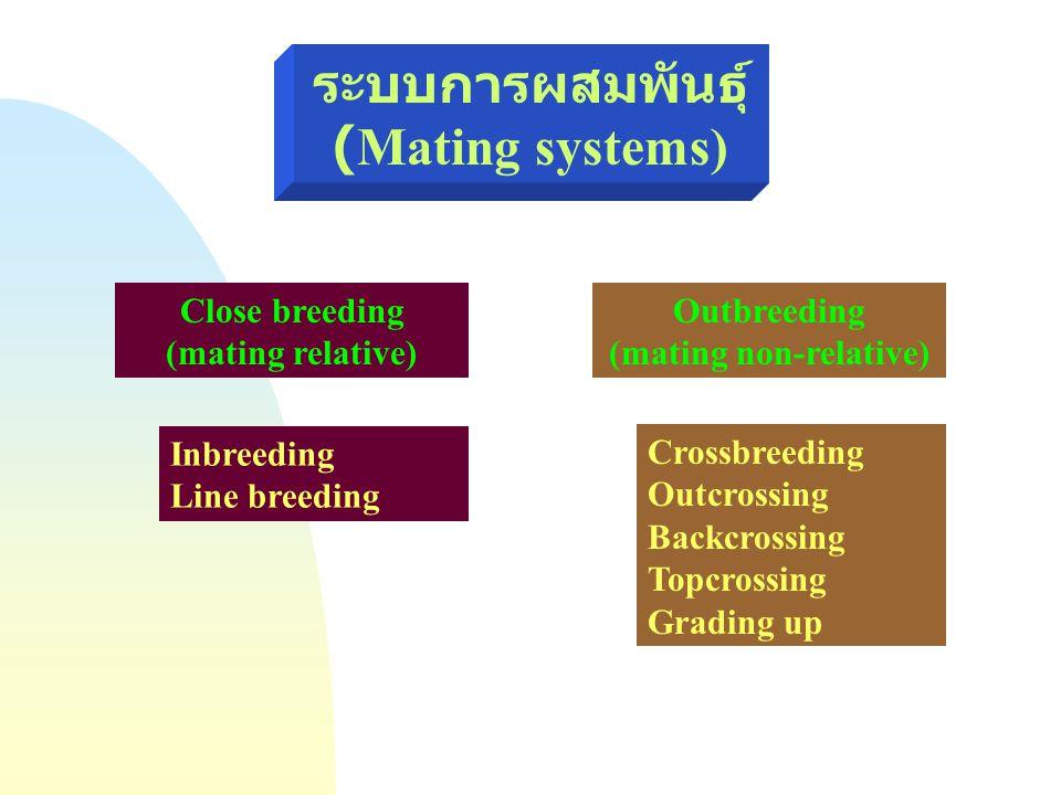 ระบบการผสมพันธุ์(Mating systems) (mating non-relative)