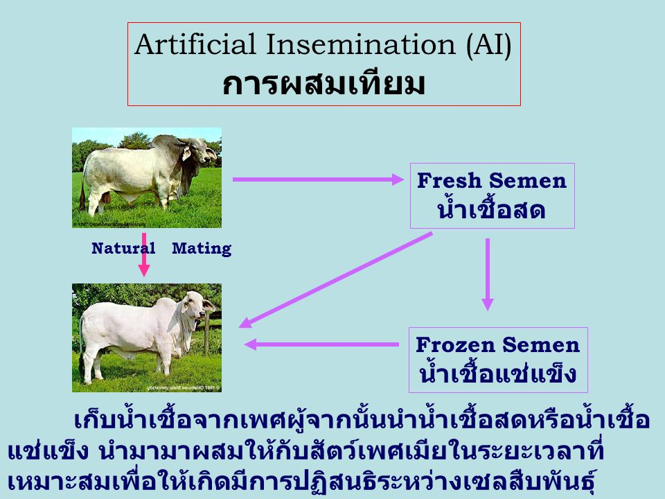 Artificial Insemination (AI)