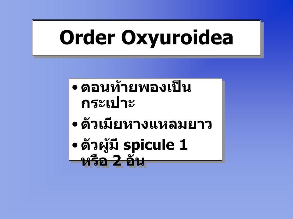 Order Oxyuroidea ตอนท้ายพองเป็นกระเปาะ ตัวเมียหางแหลมยาว