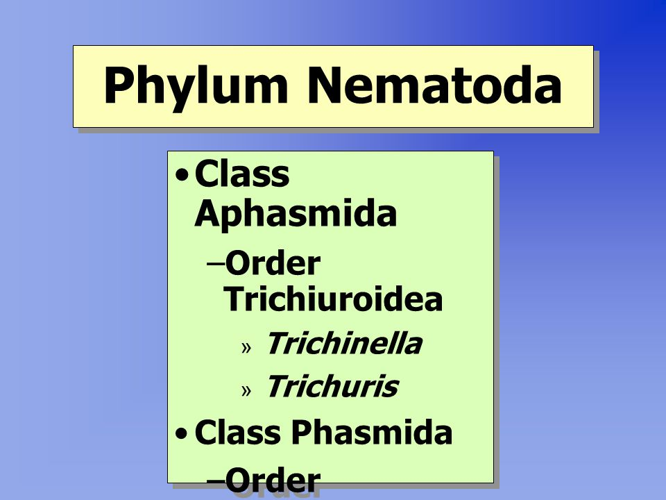 Phylum Nematoda Class Aphasmida Order Trichiuroidea Class Phasmida